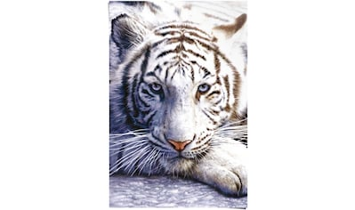 Reinders! Poster »Weißer Tiger«, (1 St.) kaufen