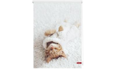 LICHTBLICK Seitenzugrollo »Klemmfix Digital Sleepy Cat«, verdunkelnd, energiesparend, ohne Bohren, freihängend, bedruckt kaufen