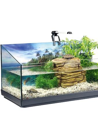 Tetra Aquarien-Set »Repto«, BxTxH: 40x39x77 cm, 40 l, für junge Wasserschildkröten kaufen