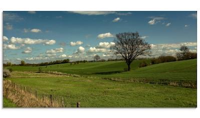 Artland Glasbild »Natur pur Wiesen«, Felder, (1 St.) kaufen