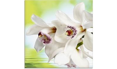 Artland Glasbild »Weiße Orchidee«, Blumen, (1 St.) kaufen