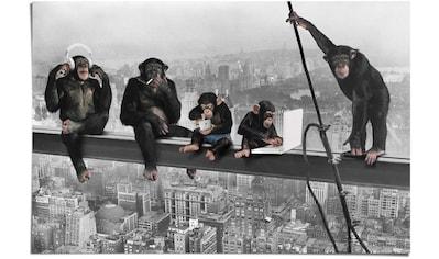 Reinders! Poster »Schimpanse Stahlträger«, (1 St.) kaufen