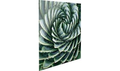 Reinders! Glasbild »Agave Rosette« kaufen
