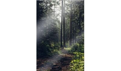 Wall-Art Glasbild »Waldweg« kaufen