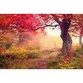 Papermoon Fototapete »Autumn Trees«