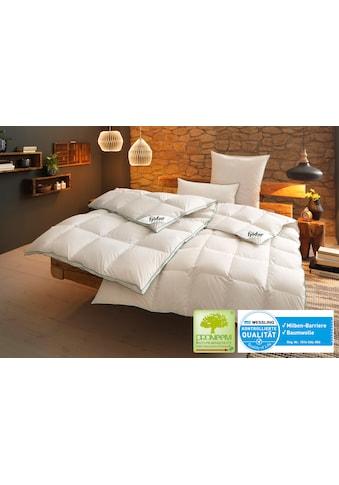 fjödur Bettdecke + Kopfkissen »Fee«, (Spar-Set) kaufen
