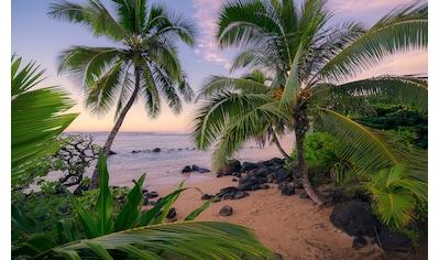 Komar Fototapete »Hawaiian Dreams«, mehrfarbig-natürlich-bedruckt kaufen