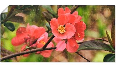 Artland Wandbild »Quittenblüte I« kaufen