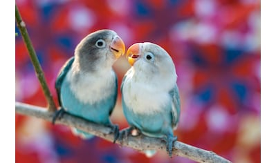 Papermoon Fototapete »Love Birds« kaufen