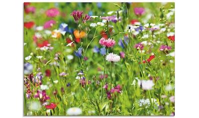 Artland Glasbild »Blumenwiese I«, Blumenwiese, (1 St.) kaufen