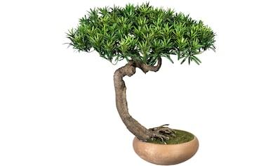 Creativ green Kunstbonsai »Bonsai Podocarpus Shankan«, in Keramikschale kaufen