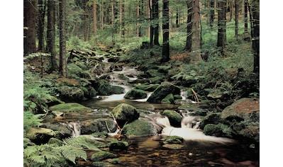 PAPERMOON Fototapete »Nature«, Vlies, in verschiedenen Größen kaufen
