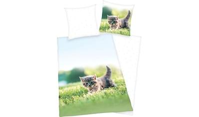 Herding Young Collection Kinderbettwäsche »Kätzchen«, mit niedlichem Tiermotiv kaufen