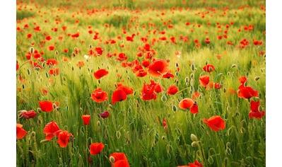 Papermoon Fototapete »Field of Poppies« kaufen