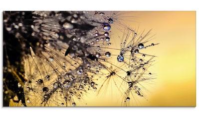 Artland Glasbild »Pusteblume mit Tautropfen benetzt« kaufen