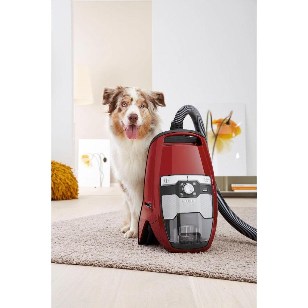 Miele Bodenstaubsauger »Blizzard CX1 Cat & Dog PowerLine«, 890 W, beutellos