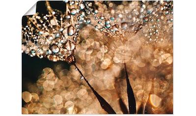 Artland Wandbild »Pusteblume Goldschimmer« kaufen