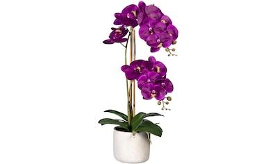 Creativ green Kunstorchidee »Phalaenopsis«, im Zementtopf kaufen