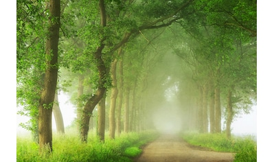 Architects Paper Fototapete »Into the Mist«, Allee, Vlies, glatt kaufen