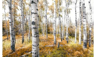 KOMAR Fototapete »Colorful Aspenwoods«, Bahnbreite: 50 cm; Motiv bestehend aus mehreren Bahnen kaufen