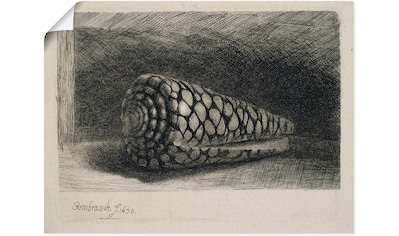 Artland Wandbild »Die Muschel. 1650« kaufen