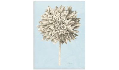 Artland Glasbild »Grafische Blumenlehre III«, Blumen, (1 St.) kaufen