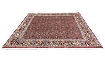 morgenland Wollteppich »Bidjar Teppich handgeknüpft rot«, quadratisch, 15 mm Höhe kaufen