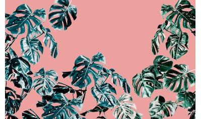 Komar Vliestapete »Pure Monstera Rosé«, naturalistisch kaufen