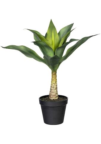 Creativ green Künstliche Zimmerpflanze »Agave mit Stamm« (1 Stück) kaufen
