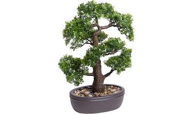 Botanic-Haus Kunstbonsai »Ficus Bonsai« kaufen