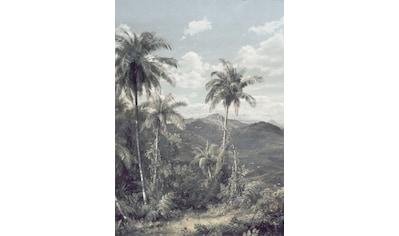 Komar Fototapete »The Exotic Land«, floral-Wald-natürlich kaufen