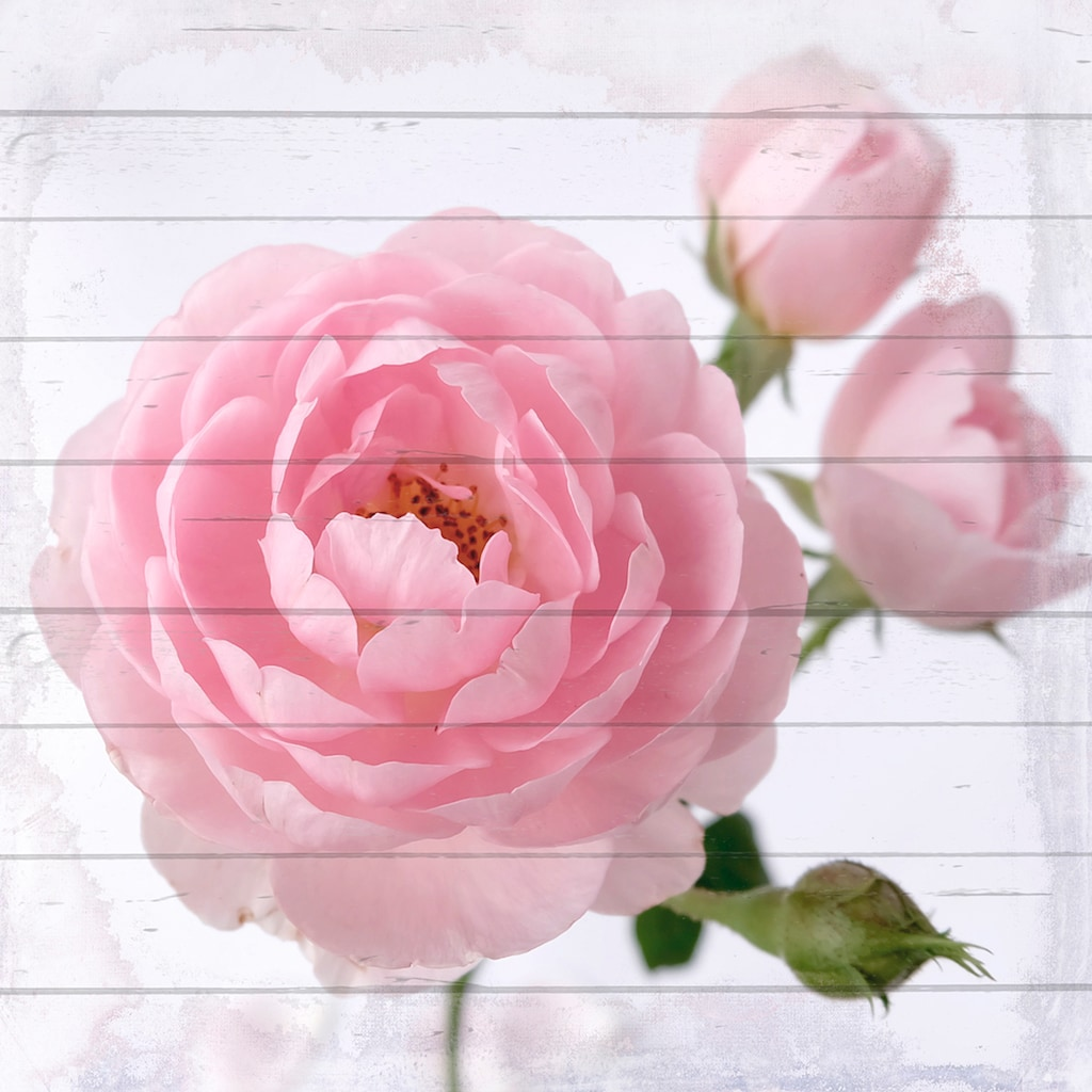 queence Holzbild »Pinke Blüte«, 40x40 cm