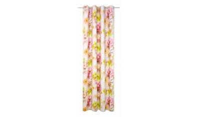Vorhang, »Molinella«, Wirth, Ösen 1 Stück kaufen