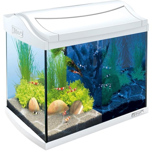 TETRA Aquarium »AquaArt LED Discovery Line«, 20 Liter, BxTxH: 39,5x28x33 cm, weiß