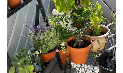GARDENA Bewässerungssteuerung »city gardening, 1265-20« kaufen