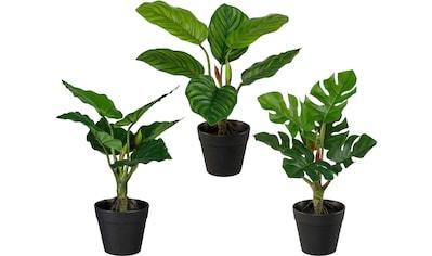Creativ green Künstliche Zimmerpflanze »Set aus Grünpflanzen«, 3er Set kaufen
