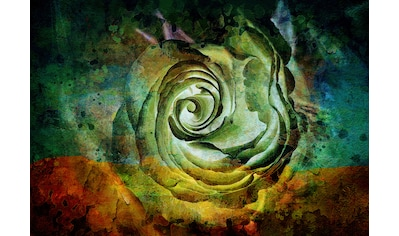 Consalnet Papiertapete »Grüne Rose«, floral kaufen
