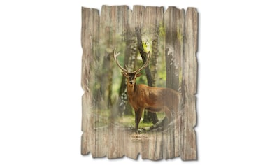 Artland Holzbild »Hirsch 4  -  Wald« kaufen