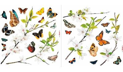 Komar Fensterbild »Schmetterlinge«, 31 x 31 cm, selbsthaftend kaufen