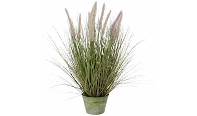 I.GE.A. Kunstpflanze »Fuchsschwanzgras« (1 Stück) kaufen