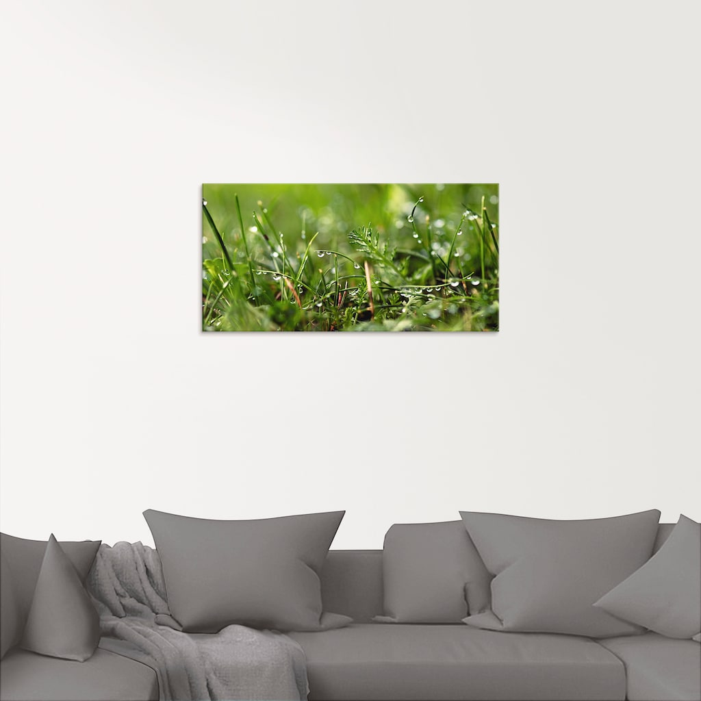 Artland Glasbild »Tautropfen«, Gräser, (1 St.)